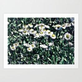 Chamomile Art Print