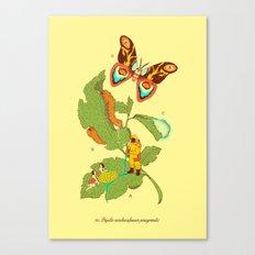 Papilio insulaeinfanum praegrandis Canvas Print