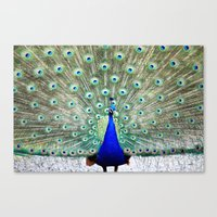 peacock Canvas Prints featuring Peacock by WhimsyRomance&Fun