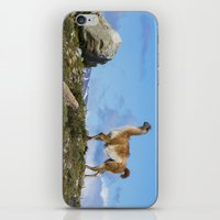 chile iPhone & iPod Skins featuring A Guanoco, in Patagonia, Chile. by davehare