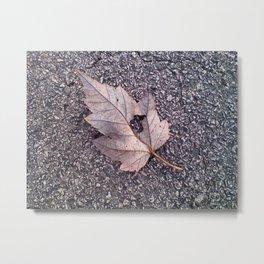 Leaf at 41 Degrees Metal Print