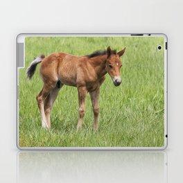 Little Colt Laptop & iPad Skin