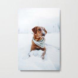 Dog Sitting in Snow Metal Print