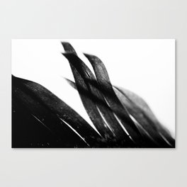 Curve and Wish Canvas Print
