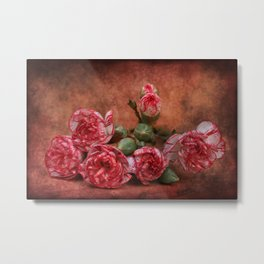Carnation flowers Metal Print