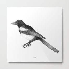 Magpie (Pica pica) - balck and white Metal Print