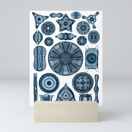 Ernst Haeckel Diatomea Diatoms in Navy Blue Mini Art Print
