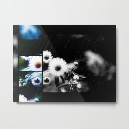 Asters Aglow Photo Collage Metal Print
