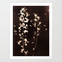 Botanicus (69) Art Print