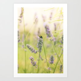 A bee on the lavender Art Print