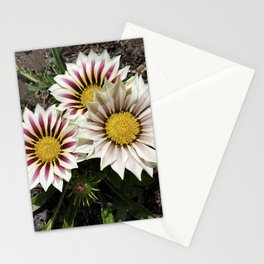 Zany Gazania - red and white stripes Stationery Cards
