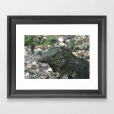 Close Up Iguana Framed Art Print