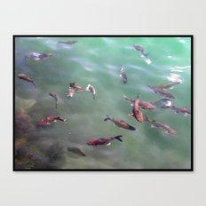 Fish! Canvas Print