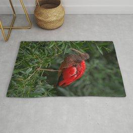 Scarlet ibis Rug