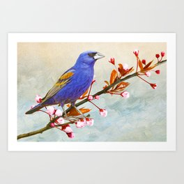 Blue Grosbeak Bird Art Print