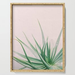 Minimal Aloe on pink background - Aloe Photography Serving Tray