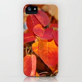 Autumn Glory - Juneberry leaves, Amelanchier iPhone Case