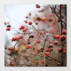 Winter Rosehips Canvas Print