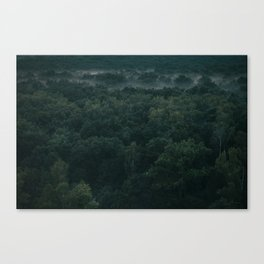 Bielański forest Canvas Print