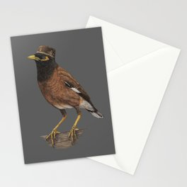 Common myna Stationery Cards