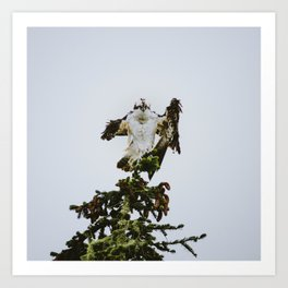 Osprey Christmas Tree Topper or Count Dracula? Art Print