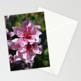 Peach Tree Blossom With Garden Background Stationery Cards