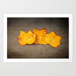 Tulip Poplar Leaves Art Print