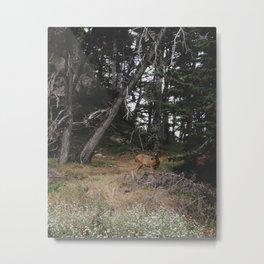 Lobos Deer Metal Print