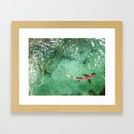 Look at the Shark Framed Art Print