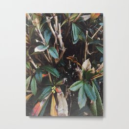 Aesthetic Leaves Metal Print