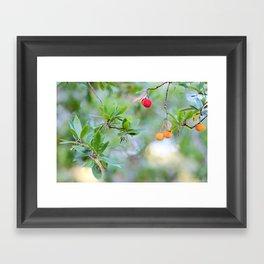 Strawberry tree fruits Framed Art Print