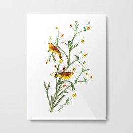 Yellow Red-poll Warbler Bird Metal Print