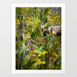 Sighted in the Spring Art Print