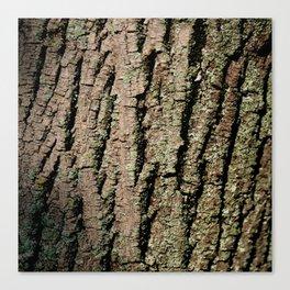 Tree Bark Wood Texture Canvas Print