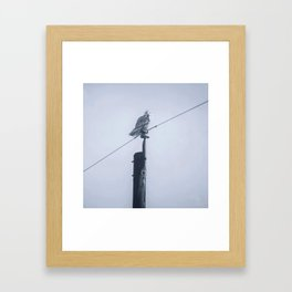 Quand le hibou chante Framed Art Print