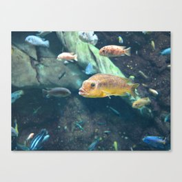 Fish 4 Canvas Print