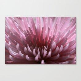 Lilac Spray Canvas Print