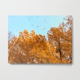 Fall foliage is falling Metal Print
