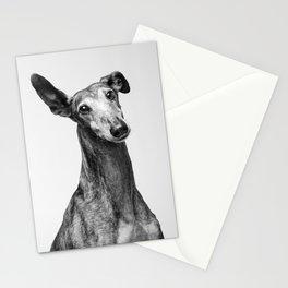 Rayito el Galgo. Stationery Cards