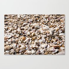shells for days  Canvas Print
