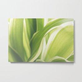 Close up of a Chlorophytum, Macro, Green leaves plant Metal Print