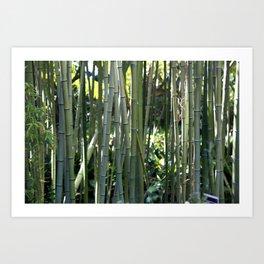 Bamboo zen calm Art Print