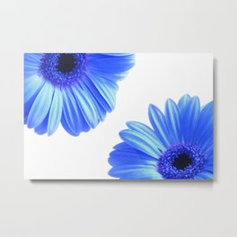 Blue Gerbera Flowers Metal Print
