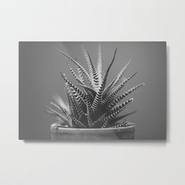 Zebra Haworthia (Stripes in Black and White) Metal Print