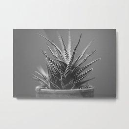Zebra Haworthia (Stripes in Black and White) Metal Print