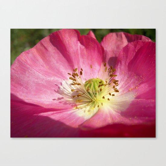 pink bloom focus IX Canvas Print