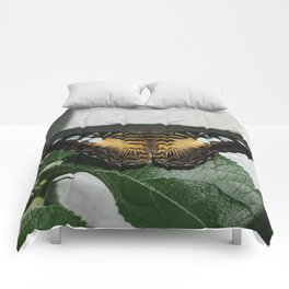 Copper Clipper Butterfly Comforters