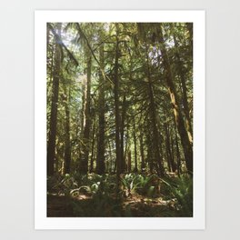 Deer in Olympic Forest Art Print