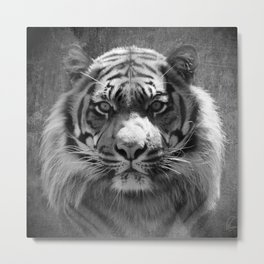 The eye of the tiger II (vintage) Metal Print