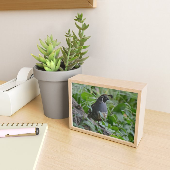 mr quail Framed Mini Art Print